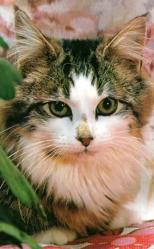 Фото кошек.  Умудренные: 3.