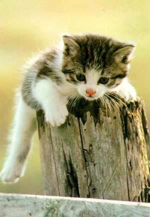 Известно, что кошек притягивает отрицательная энергия, они как бы...
